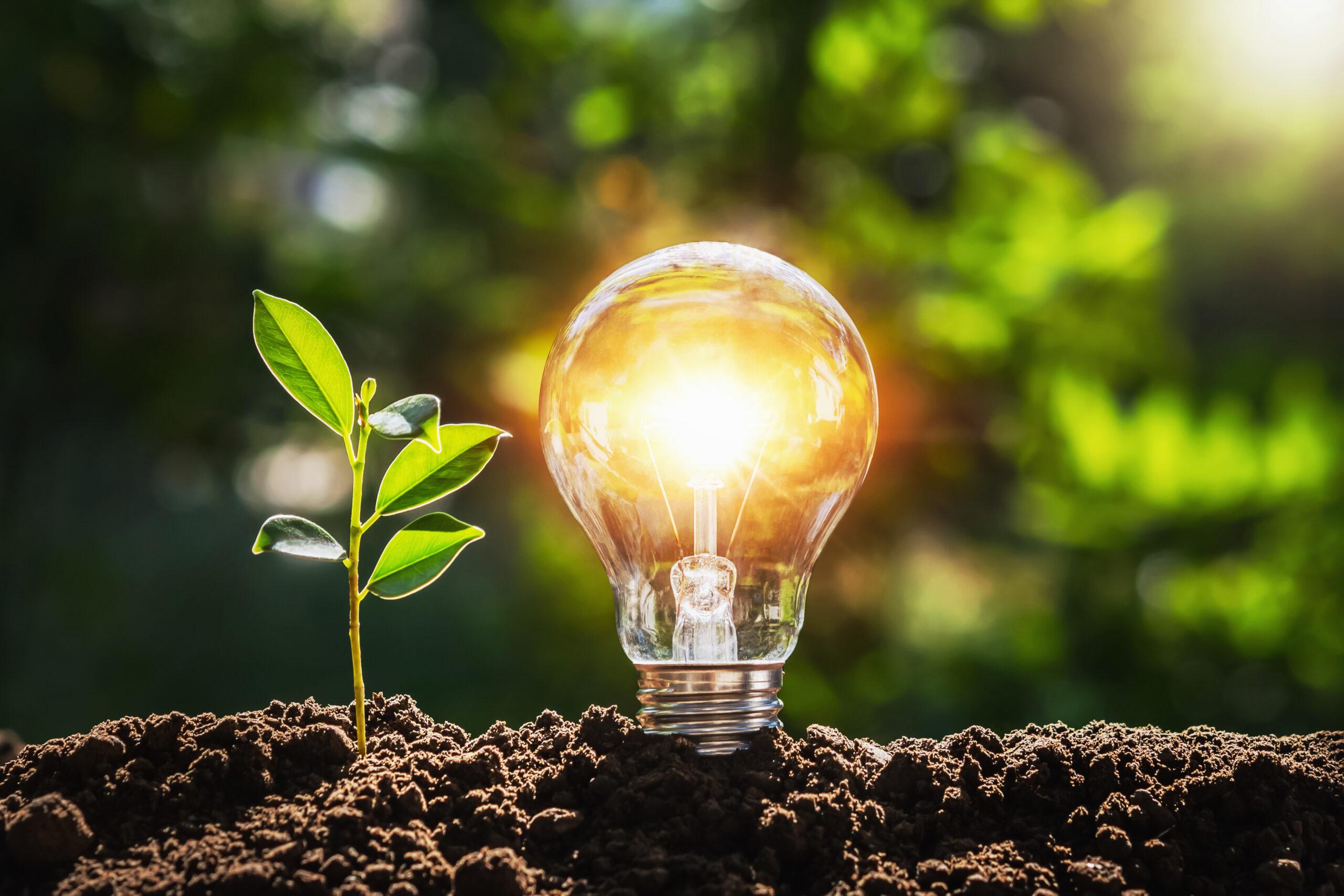 Light bulb next to grass